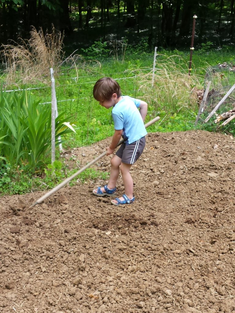 three year old jellybean planting corn